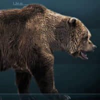 Genetic study implicates humans in demise of prehistoric cave bear 20,000 years ago