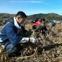 A municipality in Saitama Prefecture last year offered people who donated money under the hometown tax donational program an opportunity to reap the soybean harvests in return.   SAITAMA PREFECTURE / VIA KYODO