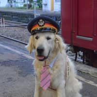 A Labrador serves as an unofficial mascot for Gujo Hachiman Station. | STEPHEN MANSFIELD