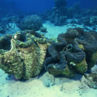 Don't let giant clams start World War III