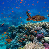 Ocean biodiversity is threatened by global demand for metals and minerals.   GETTY IMAGES