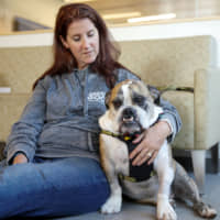 Biotech firms eye big profits as owners seek cures for their sick pets