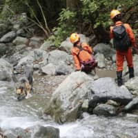 Search continues for 7-year-old girl missing from Yamanashi Prefecture camp site