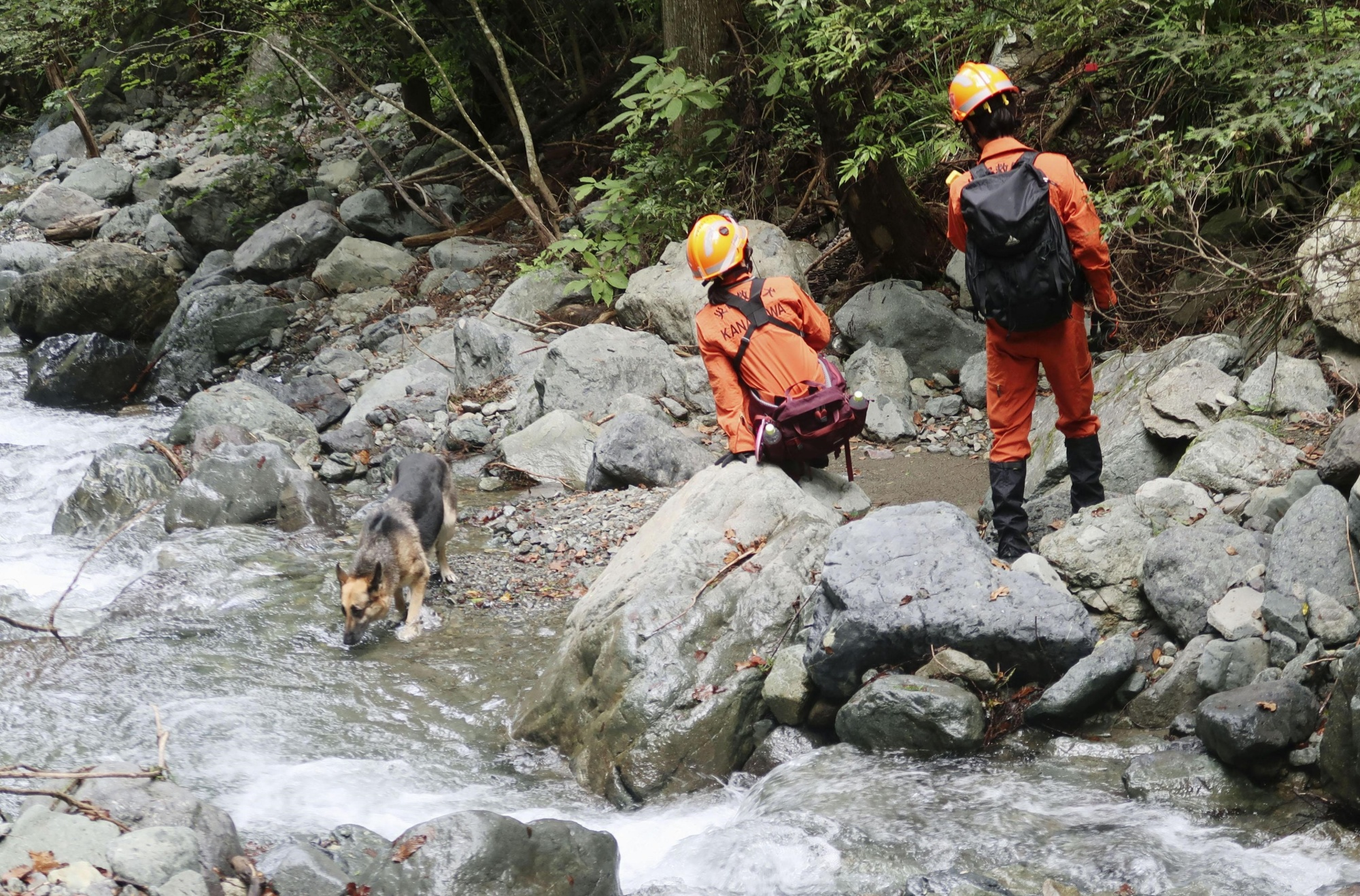 Rescuers and a rescue dog search a river near a camp site in Doshi, Yamanashi Prefecture, on Tuesday, after a 7-year-old girl went missing on Saturday. | KYODO