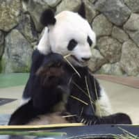Japanese cities from Kobe to Sendai compete to host panda from China