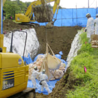 Pigs are buried after being slaughtered at a farm in Chichibu, Saitama Prefecture, on Sunday. An outbreak of swine fever was confirmed there the day before. | SAITAMA PREFECTURAL GOVERNMENT / VIA KYODO