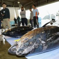 Japan's plan to increase catch of bluefin tuna in 2020 rejected by fisheries commission