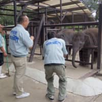 Typhoon-hit zoo in Chiba reopens thanks to help from volunteers