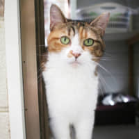Naomi the cat, named after the tennis star, is ready for some love