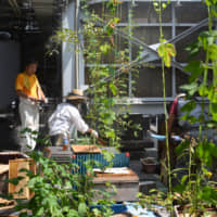 Hives in the sky: The Ginza Honey Bee Project (Ginpachi) has four apiaries and 10 bee gardens scattered across the rooftops of Ginza. | CHIARA TERZUOLO