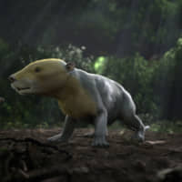 Post-apocalyptic fossils show fast rise of mammals after dinosaur demise