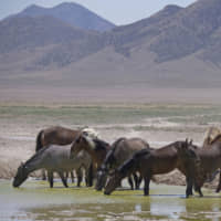 Reducing herds of wild horses and burros likely to cost U.S. $5 billion over 15 years