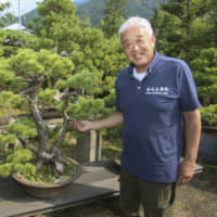 As number of growers declines, Ehime company promotes 'queen of bonsai' exports to Europe