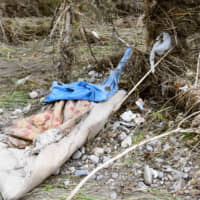 A mattress and a plastic sheet used by a homeless man known only as Otonashi are seen near the Tama River in the city of Hino in western Tokyo last week. | KYODO