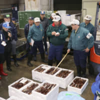 Buyers bid for squid at the Hakodate regional wholesale market in Hokkaido on Oct. 18. | KYODO