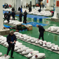 A tuna auction is held at the Toyosu fish market in Tokyo's Koto Ward on Friday, the first anniversary of the the famous Tsukiji fish market's move from neighboring Chuo Ward. | RYUSEI TAKAHASHI