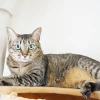 Pretty in pictures: Candle poses for a photo without her camera-shy brother, Chimney. The two cats are best buddies and looking for a home. | HARUNA AKIYAMA