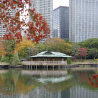 Central park: Originally a duck hunting ground opened in the 1600s, Hamarikyu Gardens is now one of the best spots to see autumn leaves in the middle of Tokyo. | TOKYO METROPOLITAN PARK ASSOCIATION