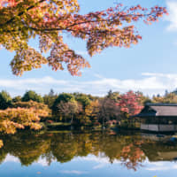 Top 10: A local's guide to where to see the autumn leaves in Tokyo