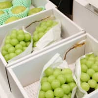 Boxes of Shine Muscat grapes from Yamagata Prefecture are shown at the Imperial Palace in Tokyo on Tuesday as an offering for the Daijokyu no gi main rite of the Daijosai ceremony performed by Emperor Naruhito on Thursday and Friday. | POOL / VIA KYODO