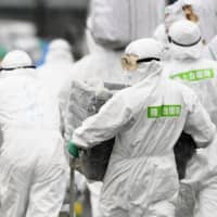 Japanese government to avoid using term 'hog cholera' to mitigate concern over swine fever
