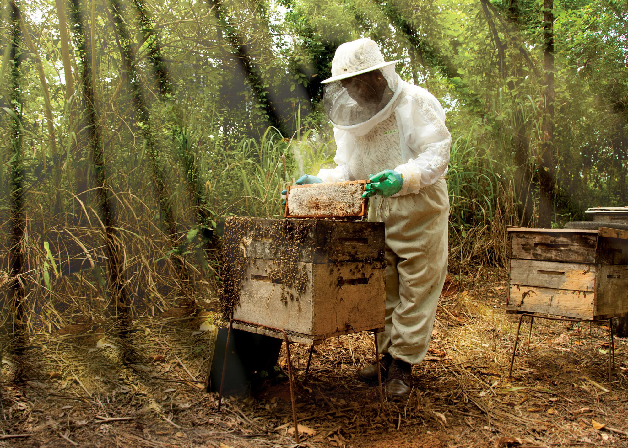 Around 200 beekeepers keep honeybees in forests owned by Celulose Nipo-Brasileira S.A. in Brazil. | OJI HOLDINGS CORP.
