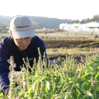 [VIDEO] Kurkku Fields forever: a sustainable farm in Chiba for the next generation