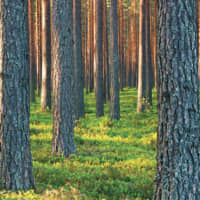 Metsä Fibre's high-quality products are made of renewable raw material coming from northern forests. The wood raw material is acquired from areas where forests grow more than they are used. | © METSÄ FIBRE