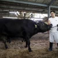 Japan hopes to double wagyu beef output amid rising overseas demand