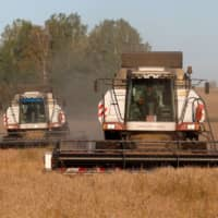 Combines harvest wheat in a field owned by the 'Siberia' farming company outside the village of Ogur in Russia's Krasnoyarsk Region on Sept. 8. | REUTERS