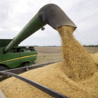 Soybeans are offloaded from a combine during the harvest in Brownsburg, Indiana. | AP
