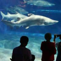 Visitors to the Aqua World Ibaraki Prefectural Oarai Aquarium in Oarai, Ibaraki Prefecture, peruse its large collection of sharks. | KYODO