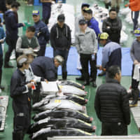 In divisive move, large-volume fish trade set to be liberalized at Tokyo's Toyosu market