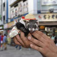 Soft touch: A ferret in full cosplay might be a strange sight anywhere else, but not in Akihabara. That may be why tons of tourists put this neighborhood on their list of places to visit.  | GETTY IMAGES