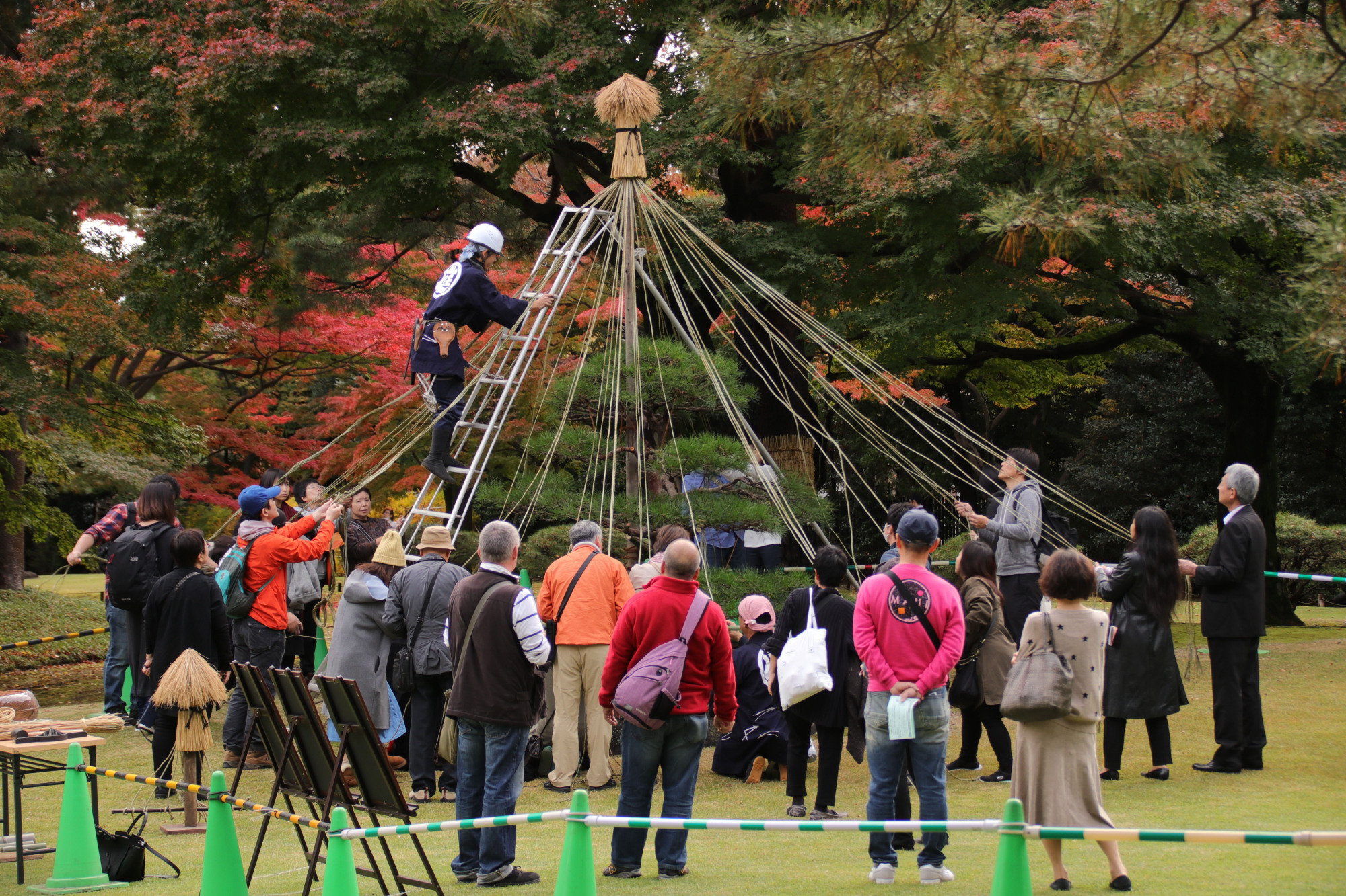 Trussing the trees: Members of the public gather to set up yukitsuri, ropes designed to protect trees from heavy snowfall. | KIT NAGAMURA
