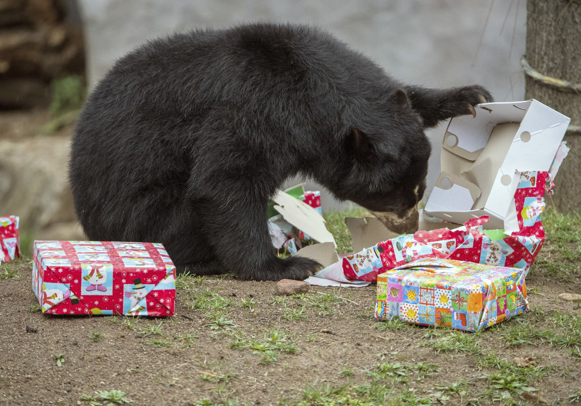 You have to give a present, not gift one. | ANDREAS ARNOLD/PICTURE-ALLIANCE/DPA/AP IMAGES