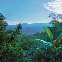 The Blue Mountains produce one of the world's best coffees.