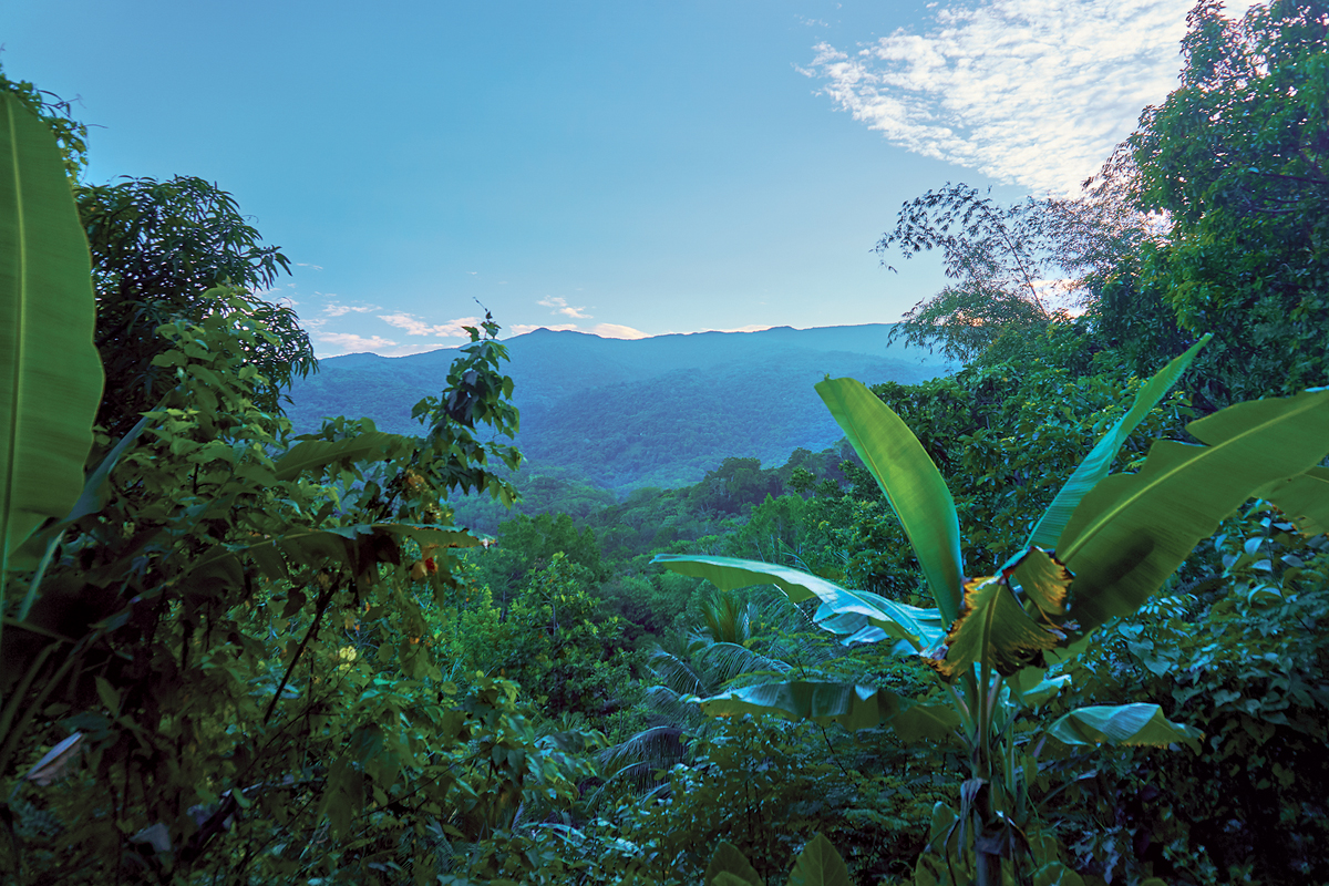 The Blue Mountains produce one of the world's best coffees. | © SHUTTERSTOCK / SUPERLENNY