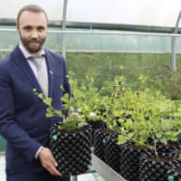 Long friendship comes full circle with Welsh gift of ginkgo trees to Japan