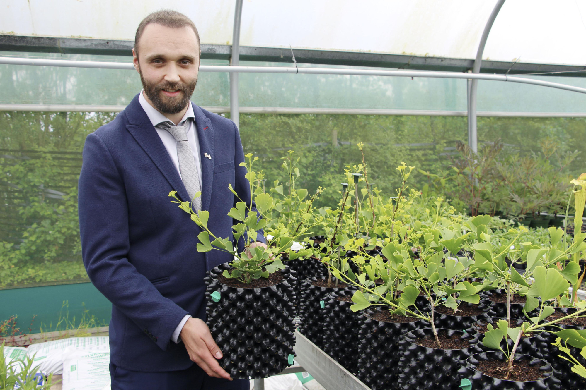 An official at the National Botanic Garden of Wales shows a pot containing a ginkgo tree sapling destined for Japan at the garden in June. | KYODO
