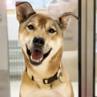 Friend goals: Pele, named after the soccer star, likes to run and he's looking for a new pal to enjoy life with. | MASAKO MERA
