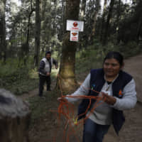 Reserve workers cordon off a path to limit how close visitors can approach the winter nesting grounds of monarch butterflies in El Rosario Sanctuary, near Ocampo in Mexico's Michoacan state, on Friday. | AP