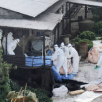 Japan to raise fines for pork smuggling in bid to contain spread of African swine fever