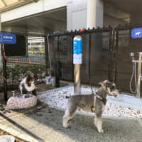Itami airport to be first in Japan to offer toilets for dogs