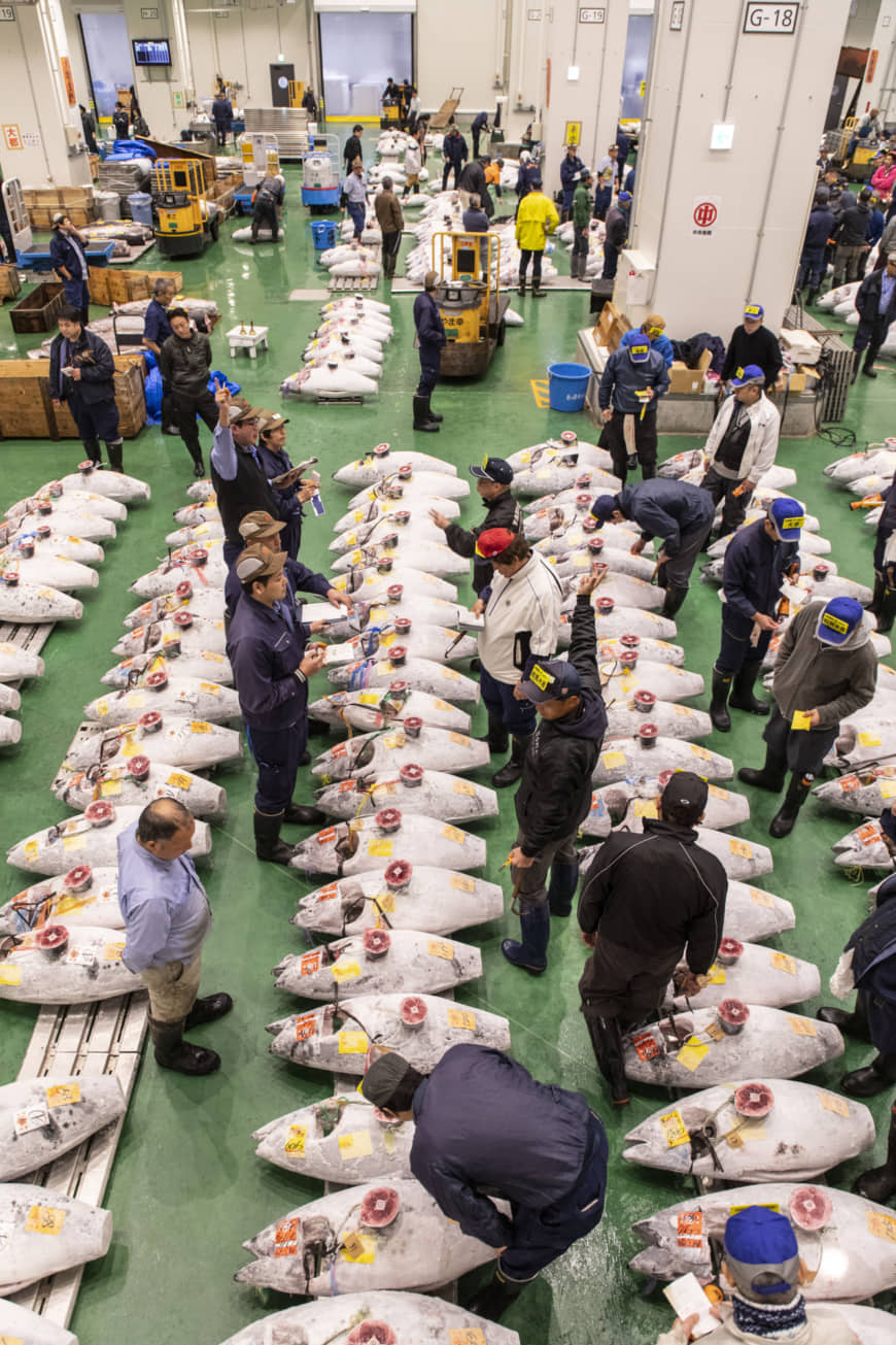 The room where it happens: Egged on by the auctioneers, bidders stand amid rows of choice tuna, using hand gestures to signal their prices. The fierce bidding wars at Toyosu's Fish Wholesale Market begin every morning at 5:30. This photo was taken by special permission from a spot off-limits to the public.
