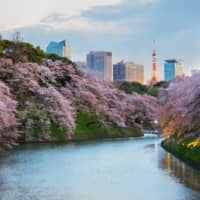The moat surrounding the Imperial Palace is typically a prime spot to view blossoms. | GETTY IMAGES