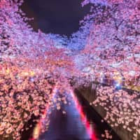 Meguro River offers visitors a chance to view the blossoms at night. | GETTY IMAGES