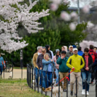 Washingtonians and tourists view cherry blossoms around the Tidal Basin on Friday. | AFP-JIJI