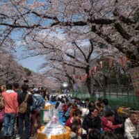 People enjoy cherry blossoms in full bloom at Ueno Park in Tokyo in March 2019. | AFP-JIJI