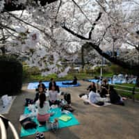 People picnic under cherry trees in full bloom in Tokyo last March. Cherry blossoms flowered in Tokyo on Saturday, the earliest date on record for the nation's capital and the first to bloom in the nation this spring, the Meteorological Agency said. | AFP-JIJI